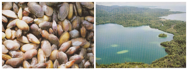 Telaga Legaye Lol (Yonelo) - Wisata Halmahera Tengah