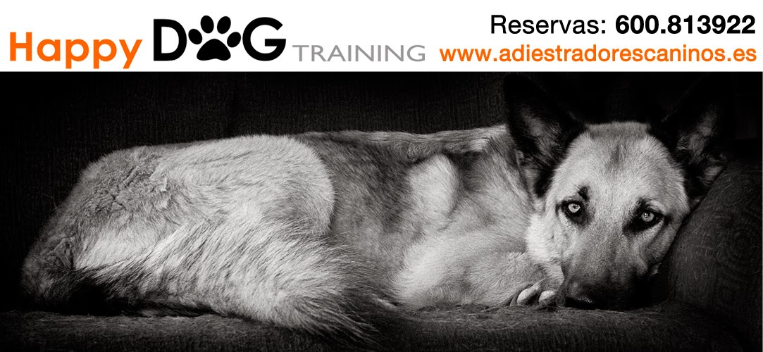 Adiestramiento canino y rehabilitación perros con problemas de conducta.