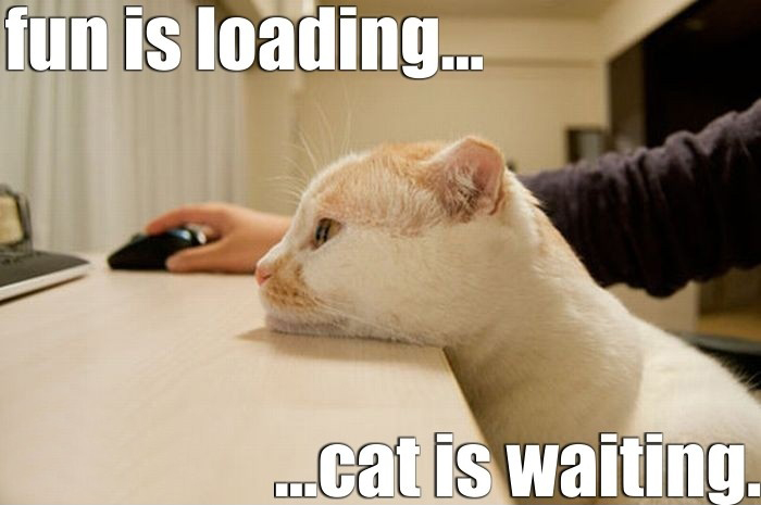 Fun Is Loading - Cat Is Waiting