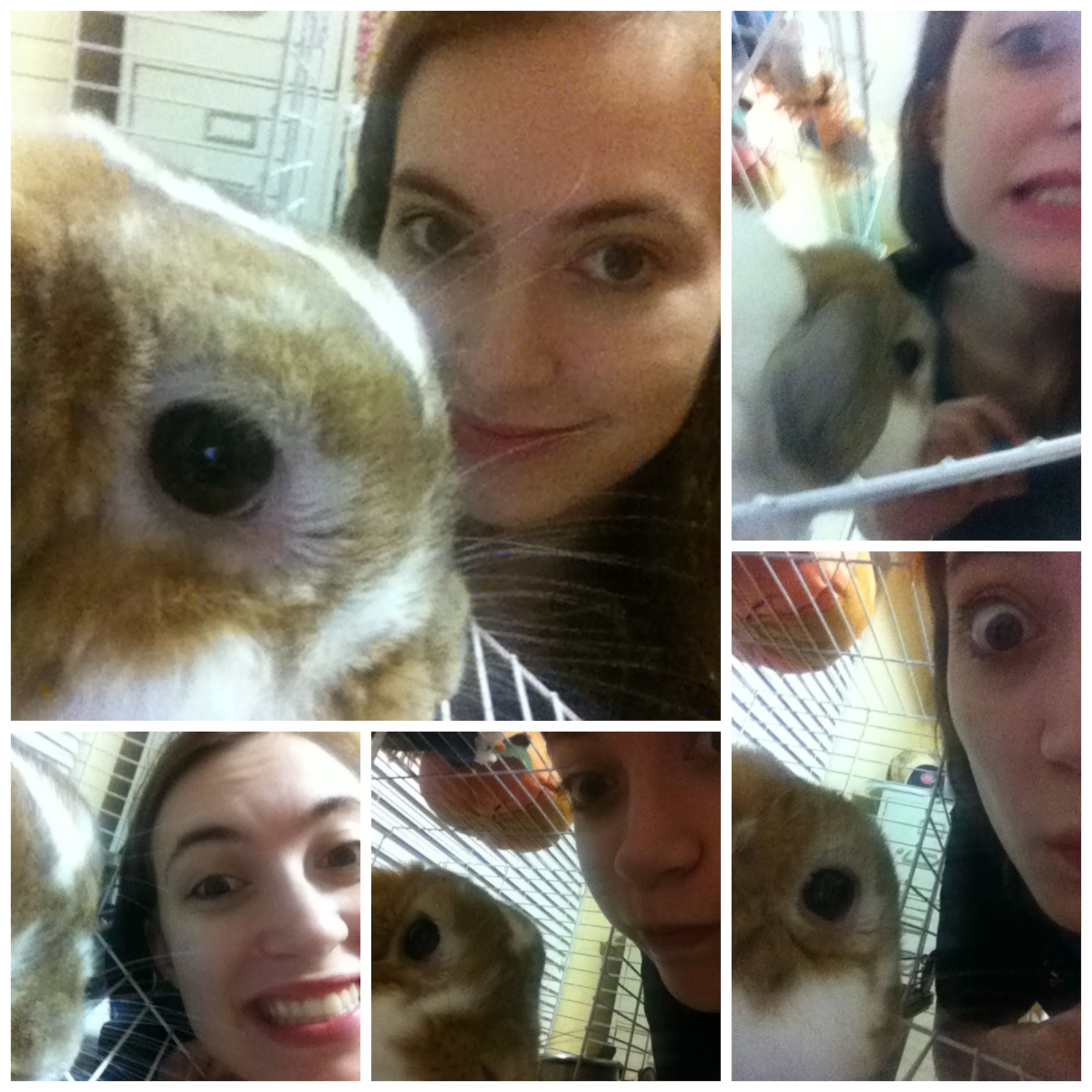 taking-pictures-with-a-rabbit