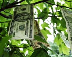 guadagnare velocemente denaro