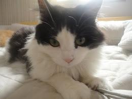 TIXA, a segunda de dois gatinhos