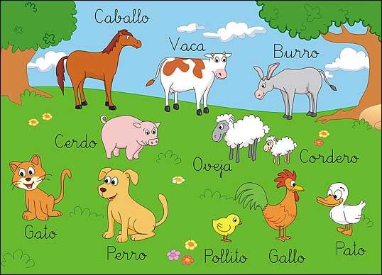 Video De Los Animales La Granja Para Ninos