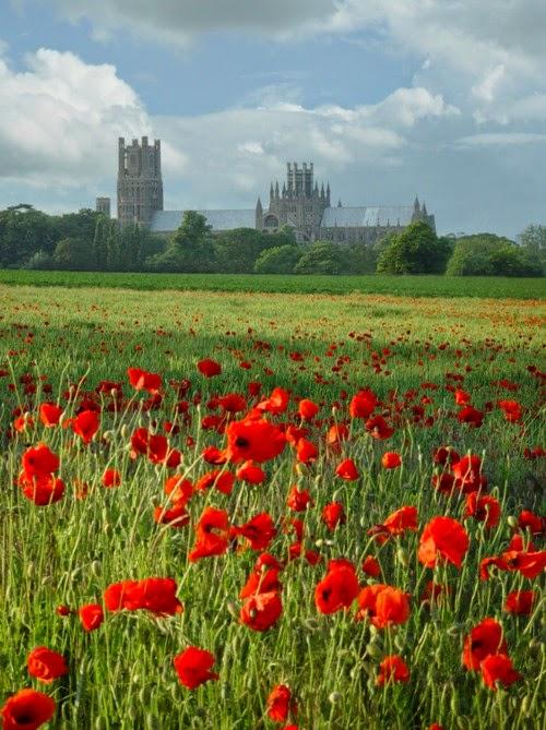 Glorious Poppies