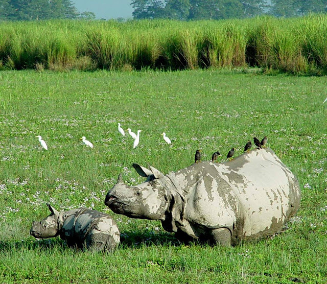 Kaziranga National Park Assam