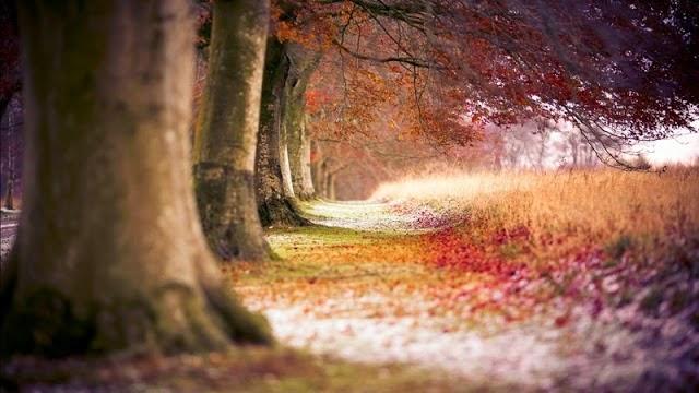 hình nền thiên nhiên mùa thu tuyệt đẹp