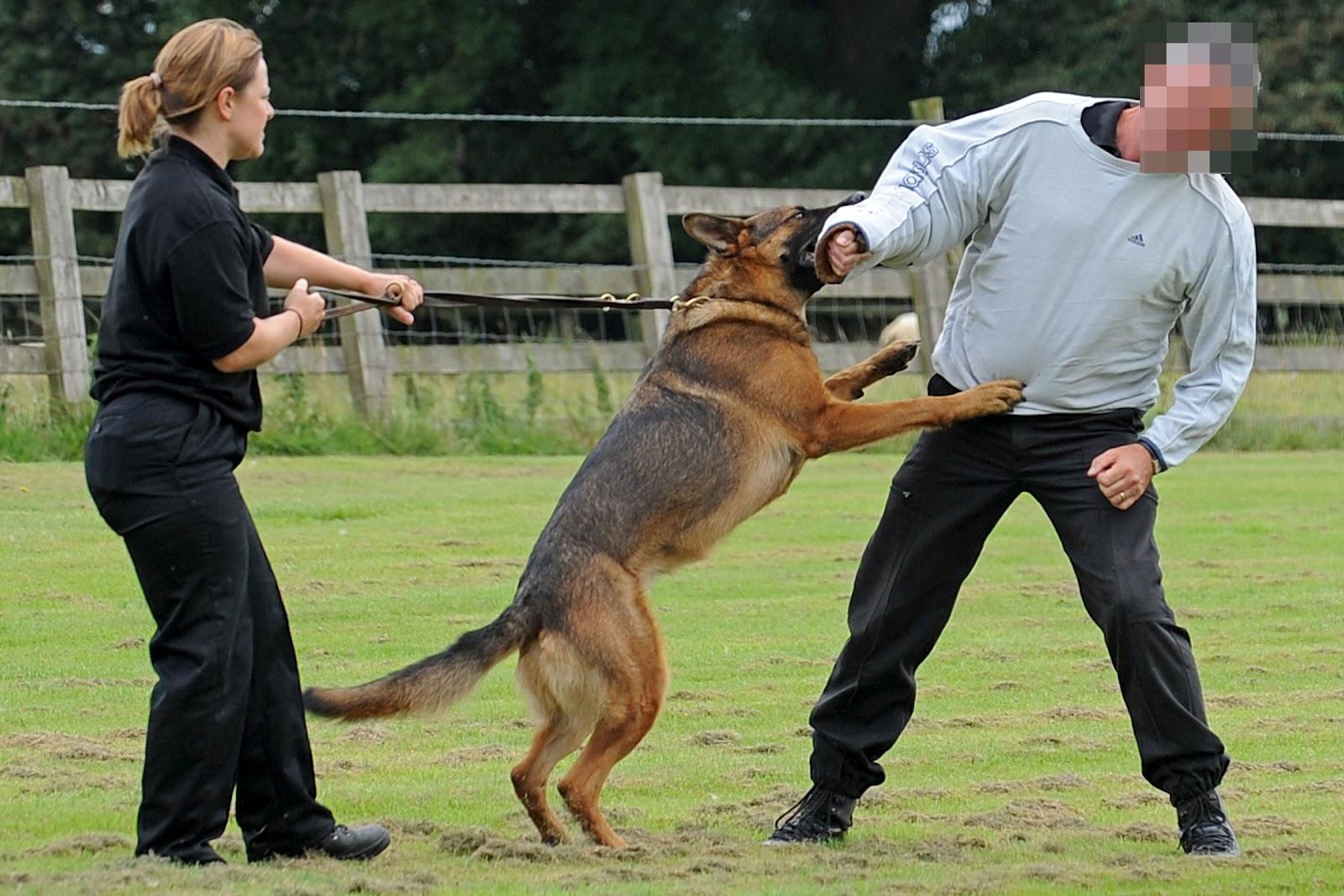 Protection Dog Training Schools