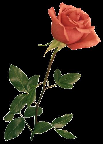 Resultado de imagen para flores gif.
