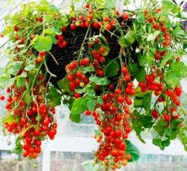 The paracord project gardening for the apartment prepper for Hanging vegetable garden ideas