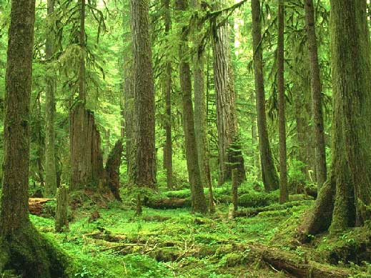 Kak да стопанисваме свойте гори?