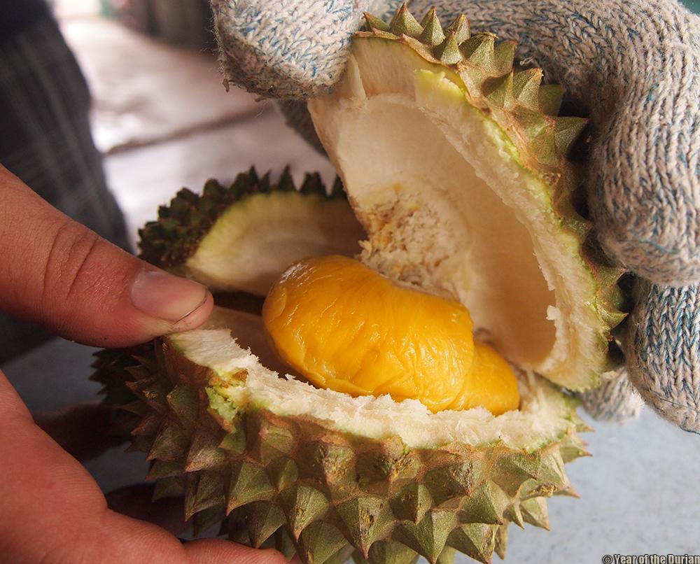 Tangkak Malaysia  city photos gallery : Durian Day Trip In Tangkak | Johor, Malaysia