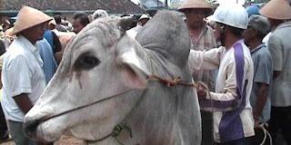 Hasil sensus sapi dan kerbau