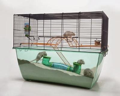 hamsters cuidados (Aprenda como cuidar do seu Hamster)