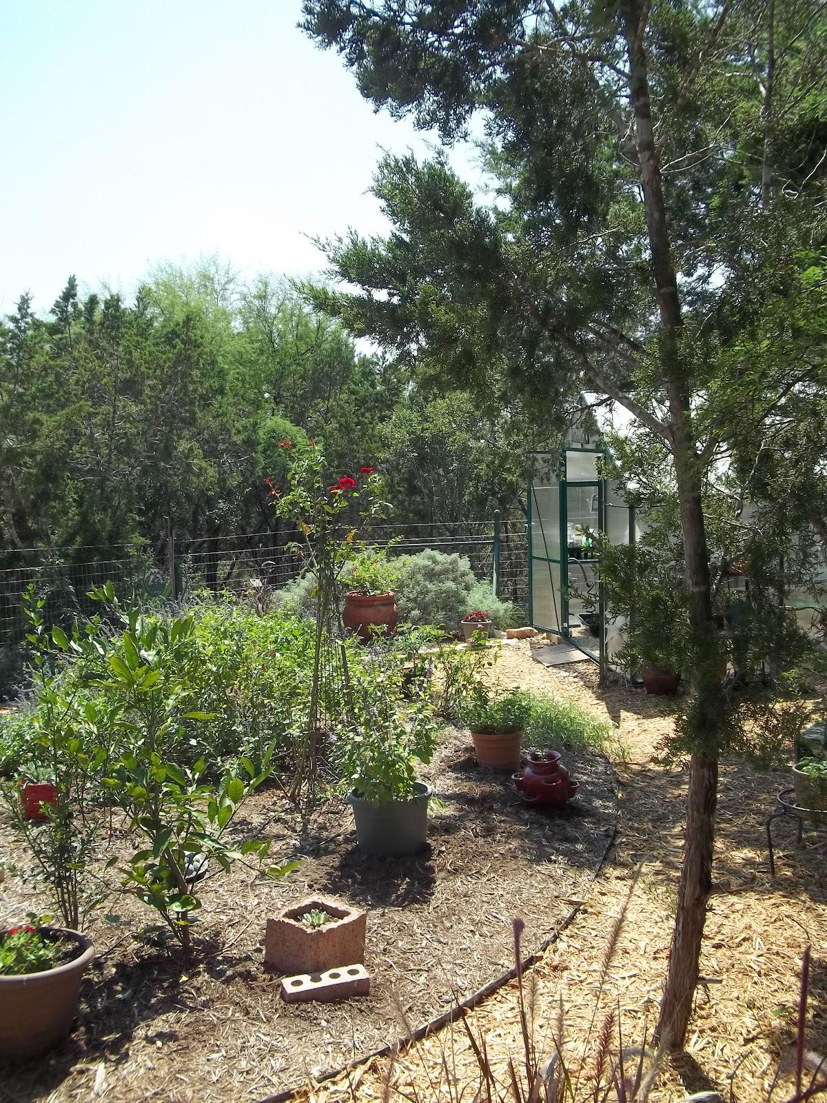 rock oak deer garden tour san antonio style xeric garden