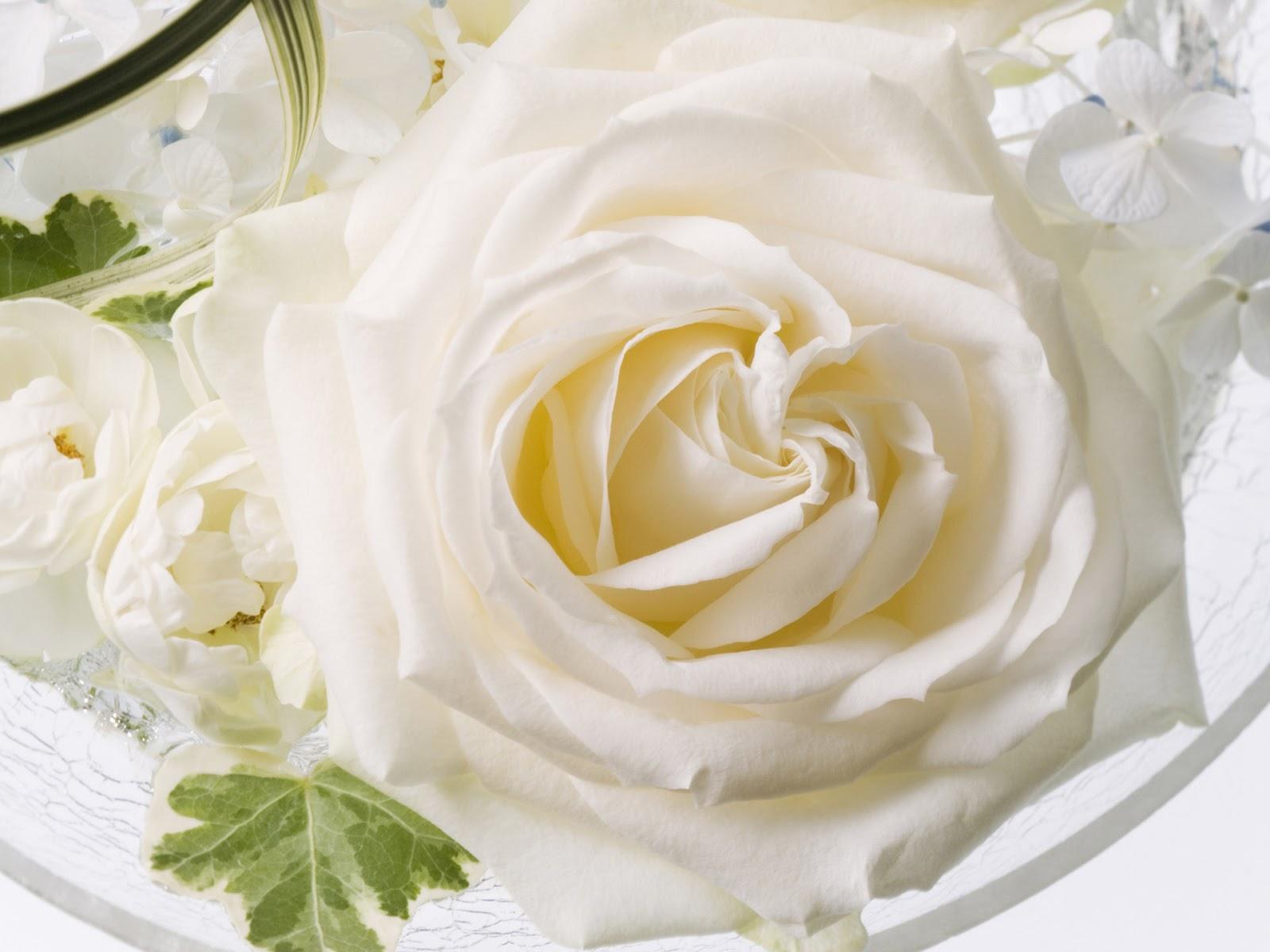 Wedding Hd White Flower Wallpaper