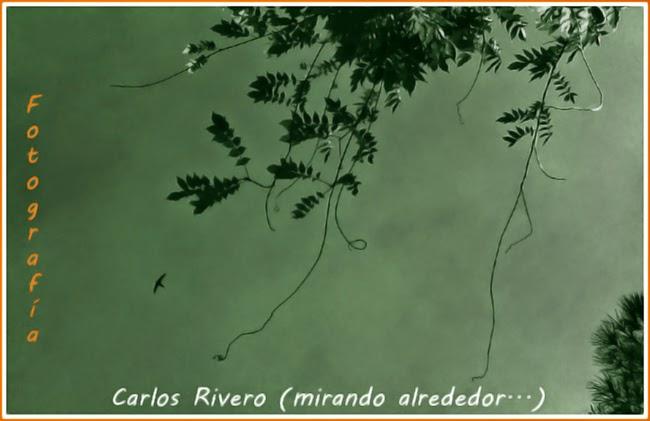 Carlos Rivero (mirando alrededor...)