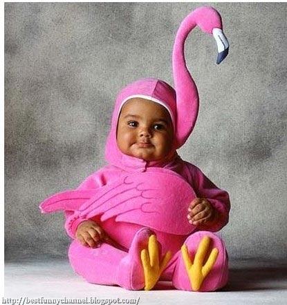 Baby flamingo..