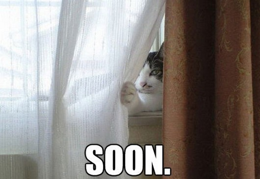 soon meme pictures, funny animal pictures, funny animals, soon meme animals