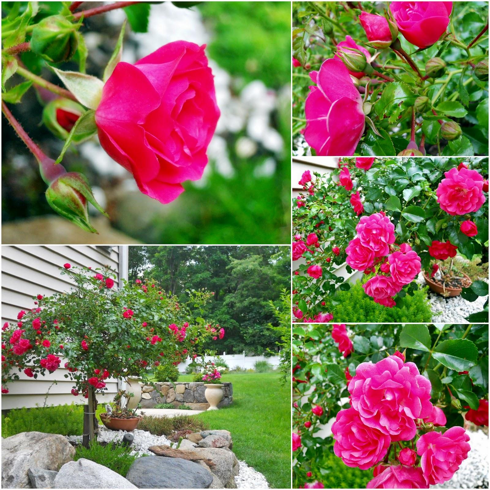 flores do jardim letra : flores no meu jardim letra ? Doitri.com