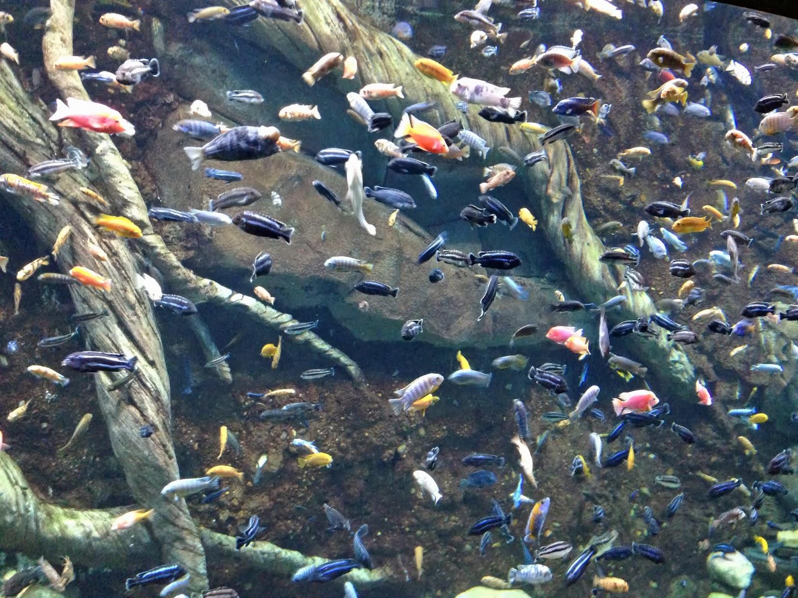 Georgia aquarium for Georgia freshwater fish