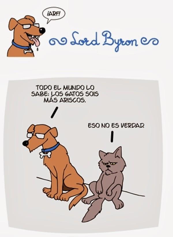 imagenes graciosas - gato arisco