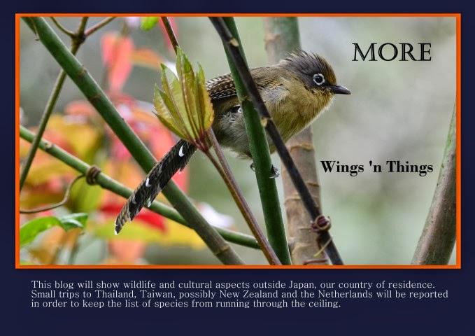 More Wings 'n Things