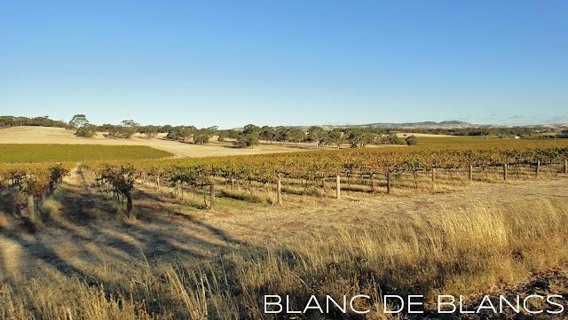 Viiniköynnöksiä Barossa Valleyssa - www.blancdeblancs.fi