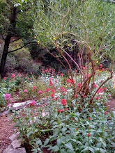 My Silverado Canyon Blog