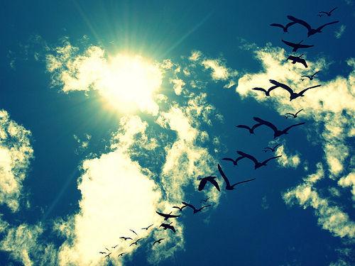 Скачать песню мне бы в небо взлететь