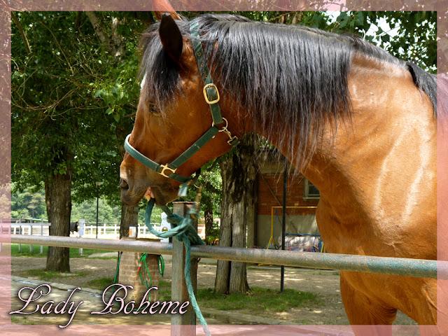 hiperica_lady_boheme_blog_cucina_ricette_gustose_facili_e_veloci_cavallo_di_nome_pegaso_pegaso2+copia.jpg