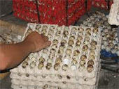 penyusunan telur puyuh