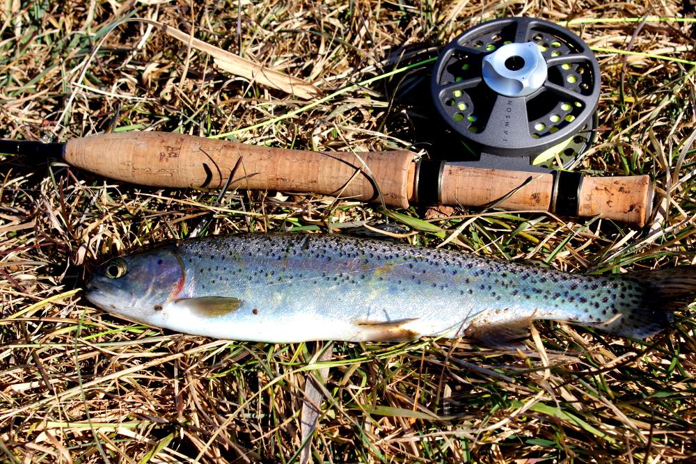 Illinois wisconsin fishing november 2012 for Trout fishing illinois