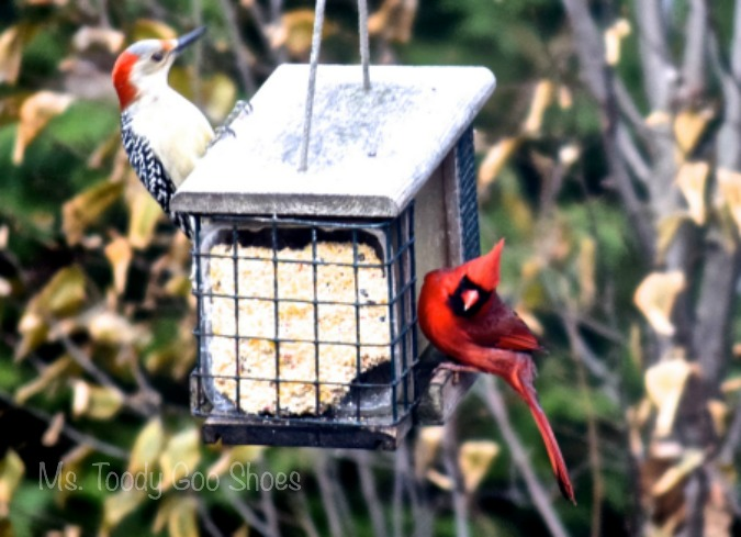 10 for attracting birds to your backyard feeder - Ms. Toody Goo Shoes