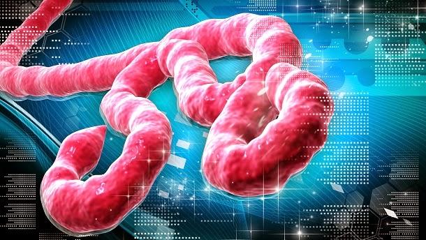 De onde veio o nome Ebola?