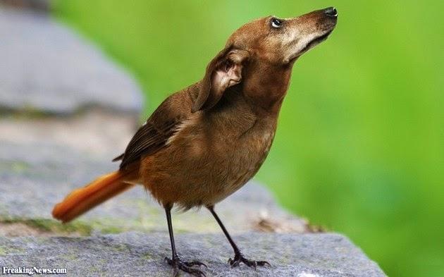 pet-head-for-birds-2