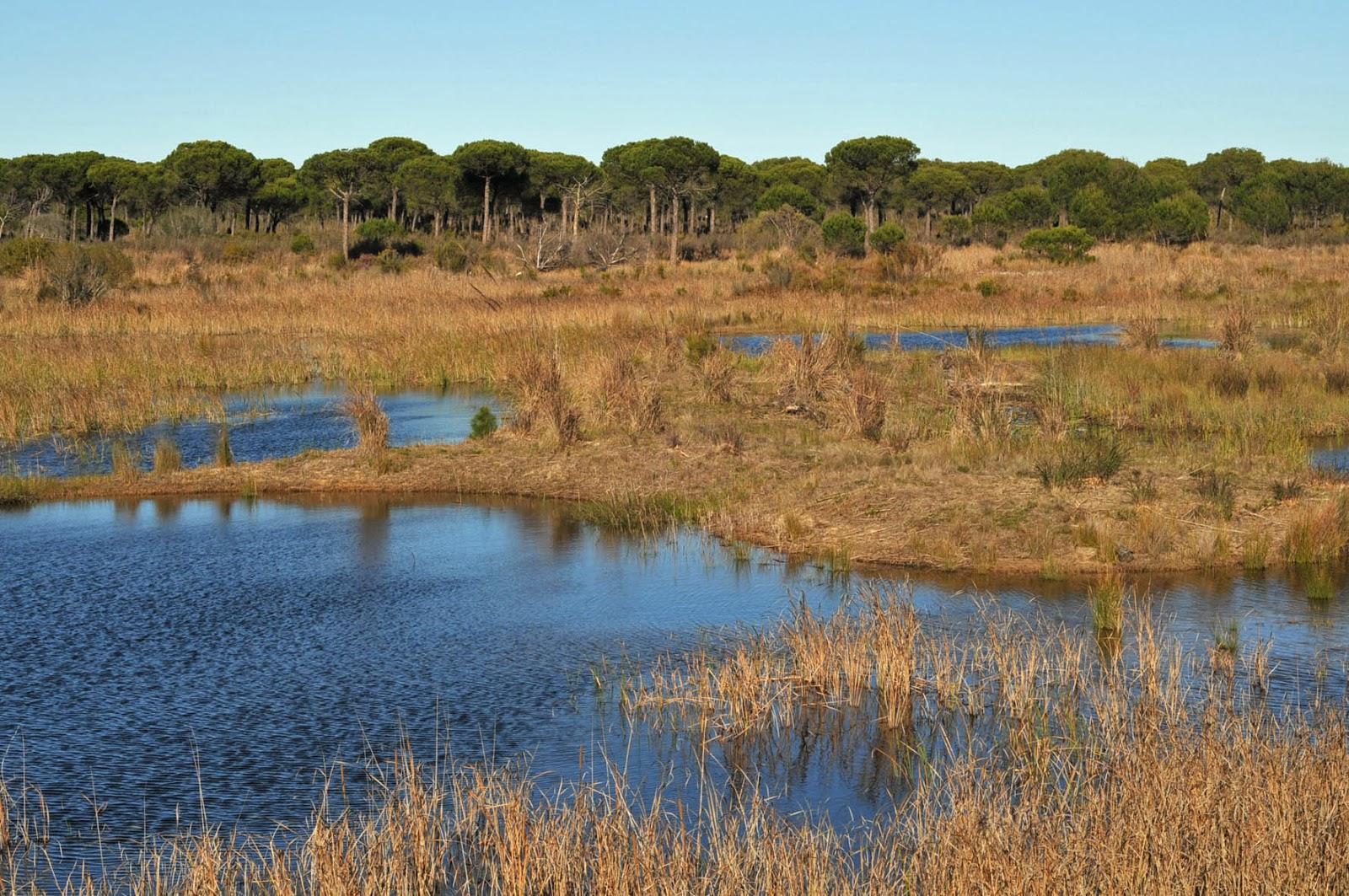 riqueza,Andalucia,superficie,protegida, biologica,especies,parque