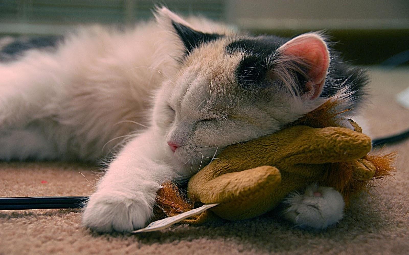 cute cats sleep wallpaper - photo #28