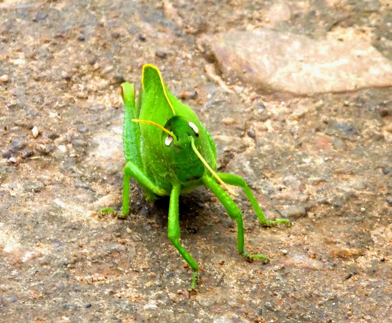 A tiny friend on the way to mahendragiri