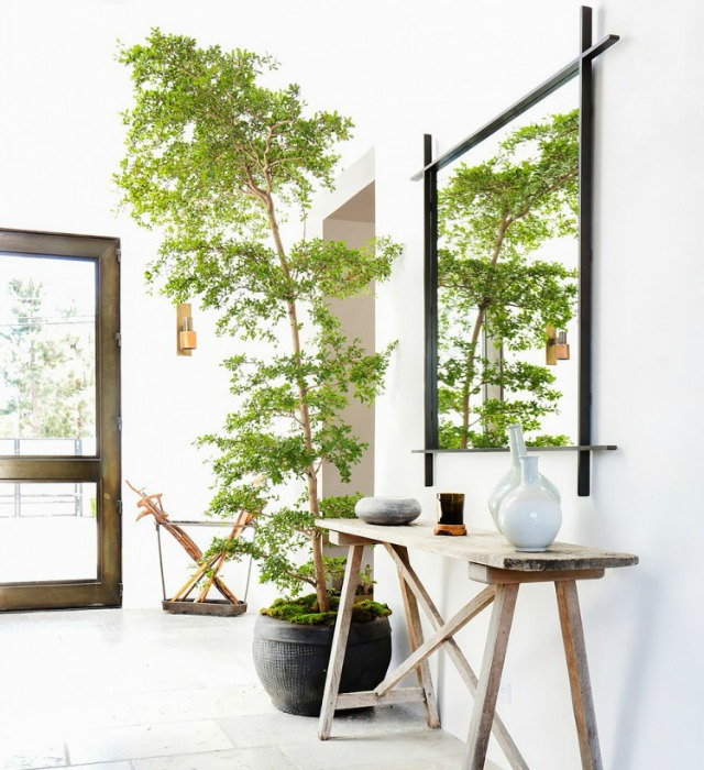 Decoraci n f cil 10 mejores plantas de interior - Plantas de interior grandes ...