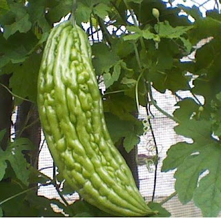 khasiat daun pare