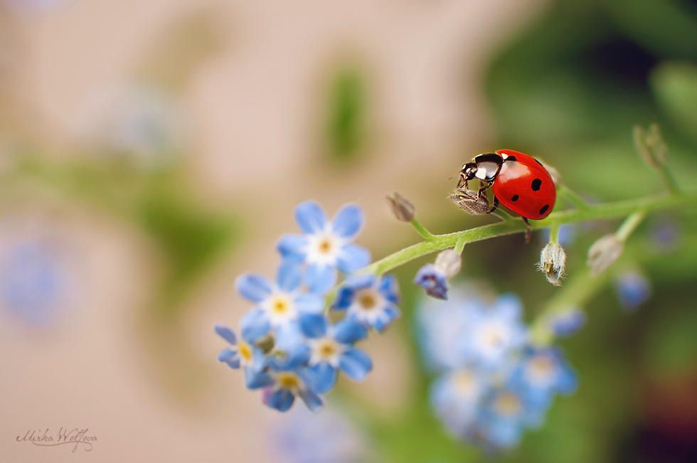 4. Ladybug