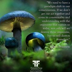 Important Words from Paul Stamets