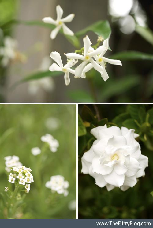 Blooming , White, Jasmine, Alyssum, Gardenia
