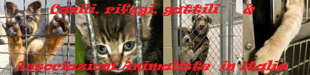 Canili, rifugi, gattili e Associazioni Animaliste in Italia