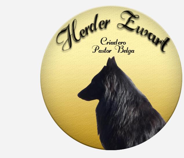 Criadero Herder Zwart - Pastor Belga