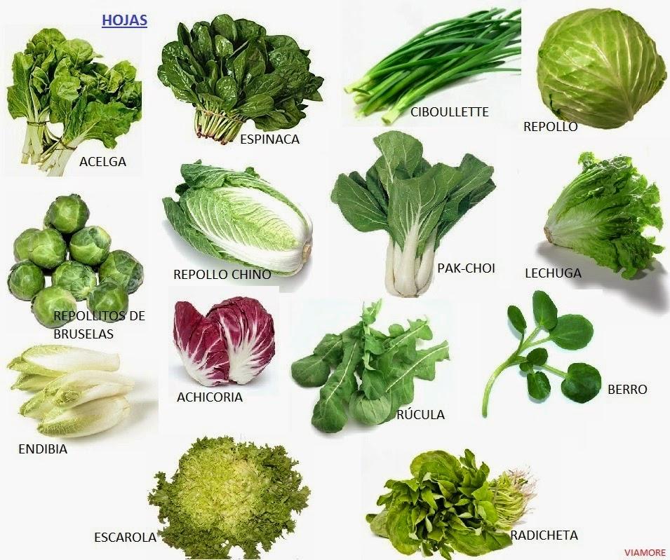 frutas verduras y hortalizas On plantas hortalizas ejemplos