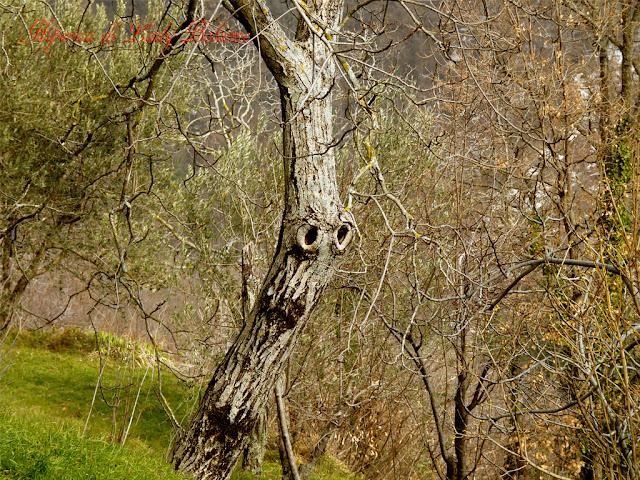 hiperica_lady_boheme_blog_cucina_ricette_gustose_facili_e_veloci_tronco_di_albero_2.jpg