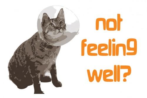 fussy cat grain free