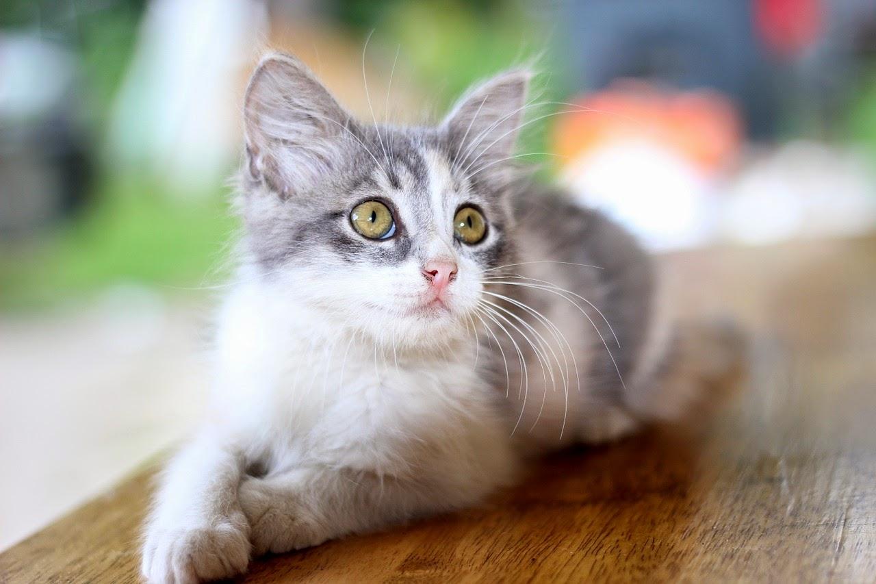 Blog Sklepu Kocimiętka Kot Sika Poza Kuwetą Dlaczego I Jak