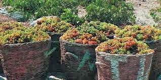 wine tourism crete